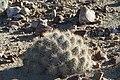 De San Rafael a la Noria de las Animas ,RAMOS ARIZPE COAHILA - panoramio (40).jpg