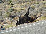 Dead Cow - Alien Highway (3961775674).jpg