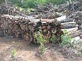 Degradação Florestal Amazônia 07.jpg