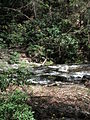 Delaware Water Gap National Recreation Area - Pennsylvania (5678352208).jpg