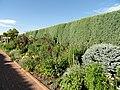 Denver Botanic Gardens - DSC01123.JPG