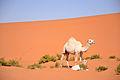 Desert (6486343117).jpg
