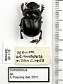 Dichotomius prietoi Martinez & Martinez, 1982 - 5615364825.jpg