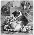 Die Gartenlaube (1877) b 665.jpg