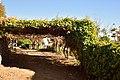 Die Mas vineyard, Wine Route, Upington, Northern Cape, South Africa (20541035765).jpg