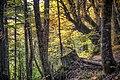 Dirfis woods 3.jpg