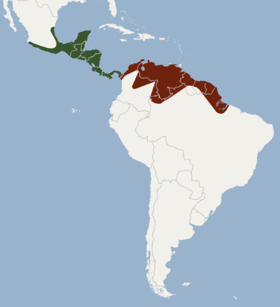 Distribution of Micronycteris microtis.png