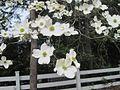 Dixon Gardens Memphis TN 2014-04-06 138.jpg