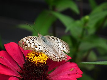 a Butterfly in the flower.