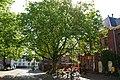 Doelenplein Delft Plataan.jpg