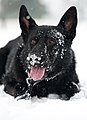 Dog days of winter 150226-F-BO262-064.jpg