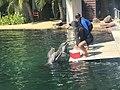 Dolphins (37414918274).jpg