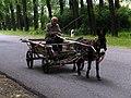 Donkey cart, Stepanavan.jpg