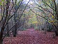 Down the track in Leigh Woods - November 2013 - panoramio.jpg