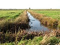 Drainage ditch in Thurlton Marshes - geograph.org.uk - 1578606.jpg