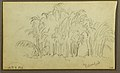 Drawing, Cows in Landscape; Verso- Bamboo, 1857 (CH 18202073-2).jpg