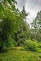 Dubrava Ščomyslickaja natural monument (Belarus) p18.jpg