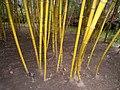 Duke Gardens - March 15, 2010 - IMG 4910.JPG