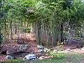 Duke Gardens - March 15, 2010 - IMG 4921.JPG