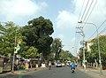 Duong le loi, tx Chau doc angiang vietnam - panoramio.jpg