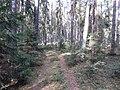 Dusetų sen., Lithuania - panoramio (102).jpg