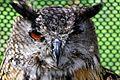 Eagle Owl - American Air Day Duxford 2010 (4920932737).jpg