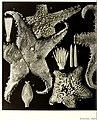 Echinodermes (astéries, ophiures et échinides) (1912) (20951981669).jpg