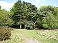 Edge of Lower Nut Hurst, Sutton Park - geograph.org.uk - 1859824.jpg