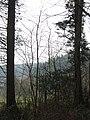 Eggesford Forest - Jan 2012 - panoramio.jpg
