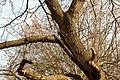 Eik (Quercus) in verval. Locatie, Natuurterrein De Famberhorst 02.jpg