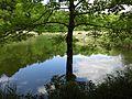 Einsamer Baum Wöhrsee.jpg