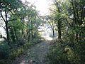 El camí G171 de Segura a Vallfogona.jpg