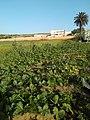 El walidia maroc.jpg