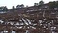 Electric Fence (An Sgòr Dubh) on Mar Lodge Estate (02APR13) (4).jpg