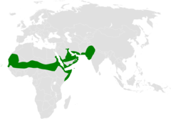 Eremopterix nigriceps distribution map.png