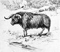Euceratherium.jpg