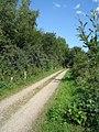 Fahrradweg - Rosenhagen - geo.hlipp.de - 4127.jpg