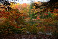 Fall-foliage-colors-forest-lake - West Virginia - ForestWander.jpg