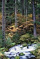 Fall Color along River, Willamette National Forest (36737280021).jpg