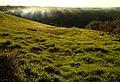 Field beside Wakeham Lane - geograph.org.uk - 273399.jpg