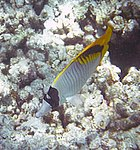 Fish 17b (30908976521).jpg