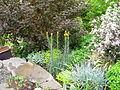 Flickr - brewbooks - Our Garden - May, 2008 (10).jpg