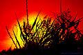 Flickr - law keven - London's burning....jpg