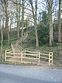 Flight of steps in woodland - geograph.org.uk - 378305.jpg