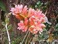 Flora Parque Nacional Manu 12.jpg