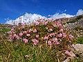 Flora silvestre en la zona altoandina de los exteriores de Candarave.jpg