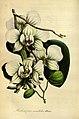Flore des serres et des jardins de l'Europe - vol. 01 - page 201.jpg