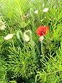 Flower (110258137).jpeg