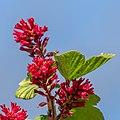 Flower EM1B9498 (49823165681).jpg