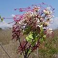 Flowers (10899861656).jpg